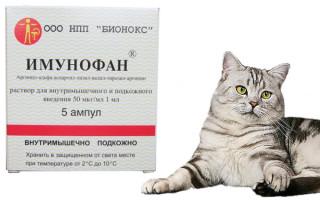 Имунофан для кошек: инструкция по применению, отзывы