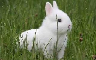 Клетки для декоративных кроликов обустраиваем жилище маленького кролика