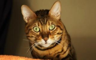 В каком возрасте кастрируют котов взвешиваем плюсы и минусы