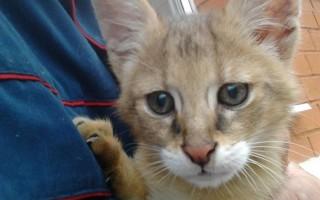 Рахит у котят симптомы и лечение – признаки рахита у котенка