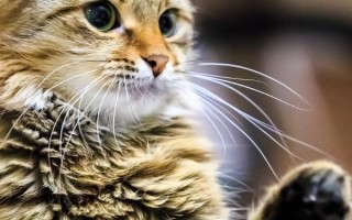 Кот кусает за руку когда его ласкают Почему Что делать