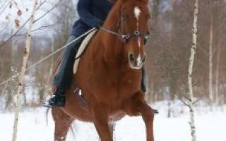 Всё про обучение • Секреты обучения лошадей