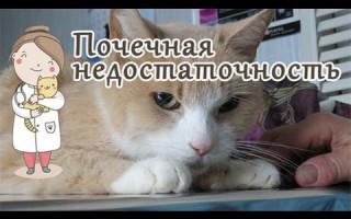 Дексаметазон для кошек: инструкция по применению, аналоги, отзывы