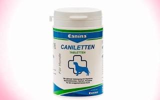 Витамины с кальцием для собак крупных и мелких пород с описанием и показаниями