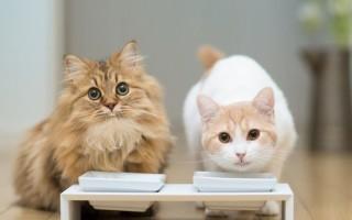 Чем нельзя кормить котят и кошек