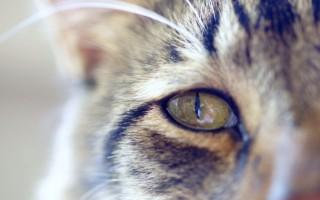 У кошки коричневые выделения из глаз причины и лечение