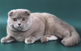 Выставка тщеславия самые дорогие породы кошек