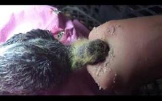 Как выкормить птенца голубя? – Наши лапки