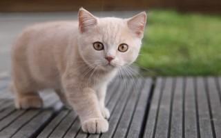 Болезни печени у кошек: причины, лечение, профилактика  Ветеринарная служба Владимирской области