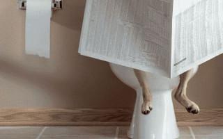 Как приучить щенка к месту в доме