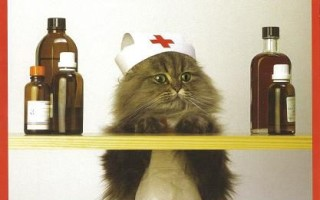 Отравление у кота: виды, причины, симптомы отравления у кошек и первая помощь