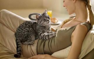 Кошачий язык или как понять кошку. Как разговаривают коты: звуковое общение и значение кошачьего поведения Как понять котов и кошек