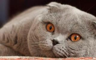 Как происходит первая вязка кота и кошки, советы хозяину