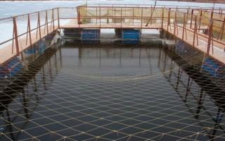 Разведение и выращивание рыбы в садках || Как осуществляется разведение рыбы в садках