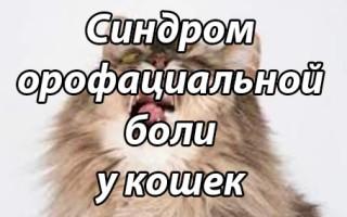 Невралгия у кошек характеристики заболевания и способы ее диагностики