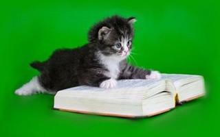 Особенности кошачьего языка