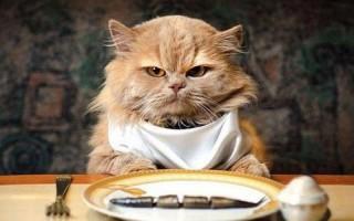 Почему кошка закапывает еду: возможные причины и как отучить