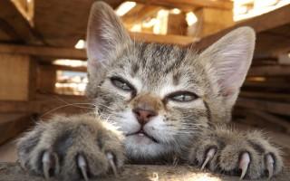 Как стричь когти кошке  правила проведения важной процедуры
