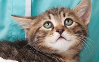 Есть ли взаимосвязь с появлением пены изо рта у кошки и раковыми заболеваниями?