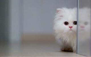 Колтуны у кошки – как избавиться?