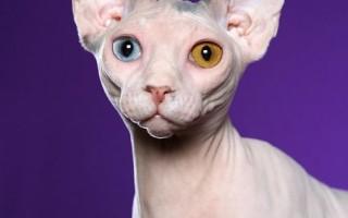 Шампунь для кошек: виды, в том числе сухой, и критерии правильного выбора