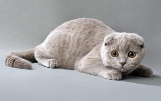 Дрессировка кошек с чего начать