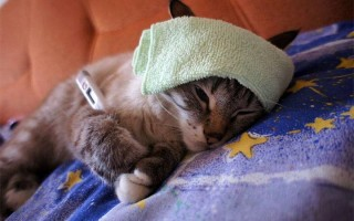 Цефтриаксон для кошек и собак, дозировка, как разводить