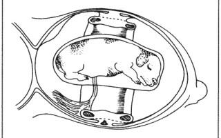 Природа процесса рождения маленьких щенков
