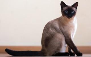Гликопин для кошек принцип действия показания к применению дозировка