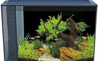 Как подготовить камни для аквариума , советы , какие выбрать