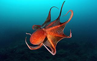 Краткая характеристика моллюсков