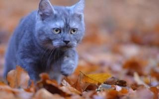 Почему кошки уходят из дома и не возвращаются
