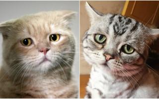 Депрессия у кошки – миф или реальное расстройство