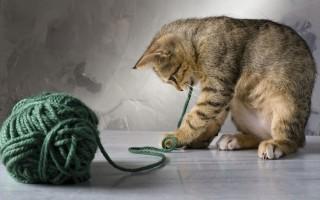 Доверие кошки: от чего зависит и как завоевать