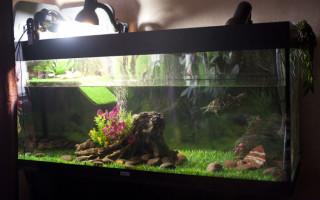 Аквариум для красноухой черепахи лампа грунт и островок