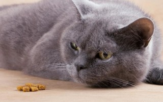 Кошка не ест ест плохо нет аппетита или он плохой