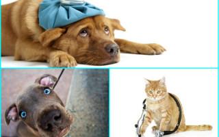 Про вирусные инфекции кошек – Полезная информация