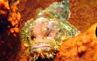 Самые опасные рыбы планеты рейтинг