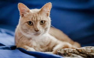 Кошка после стерилизации: проблемы, грамотный уход