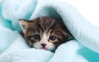 Шампунь от блох для кошек: свойства, выбор, применение