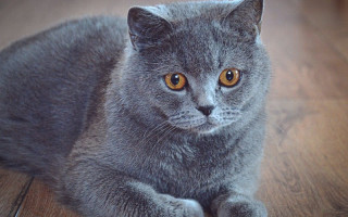 Анализ на бешенство у котов