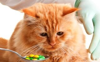 Что делать если кот отравился  причины и первая помощь