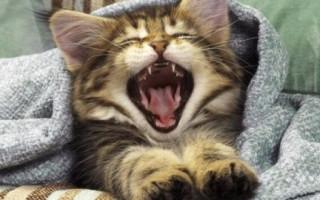 Почему кот начал очень часто чихать. Кот чихает кровью что это, опасно или нет, это глисты. Народные приметы о кошачьем чихании