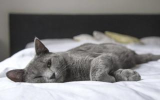 Непроходимость кишечника у кошек и котов: симптомы и лечение