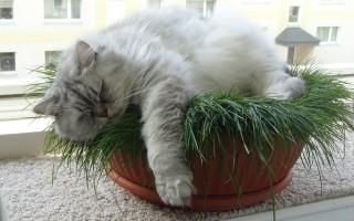Чем и как кормить кошку натуральной едой в домашних условиях