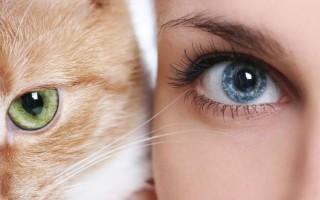 Как видят кошки наш мир и потусторонний, чем кошачье зрение отличается от человеческого?