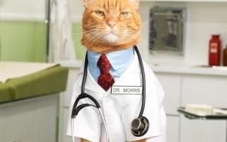 Как дать коту таблетку – правильно, если он выплевывает, из шприца, как заставить съесть