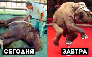 Слон расправился со своим дрессировщиком