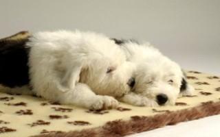 Как обустроить место для щенка