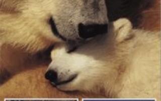 Как домашние животные заботятся о своем потомстве